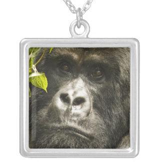 Gorila de montanha, beringei do beringei do colar banhado a prata
