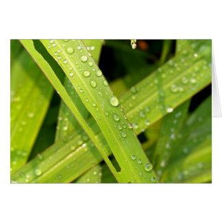 gota da água nas folhas cartão