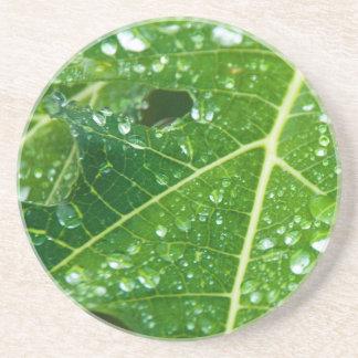 Gotas da chuva na folha verde da papaia porta copos de arenito