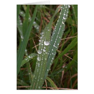 Gotas da chuva no cartão da fotografia das gramas