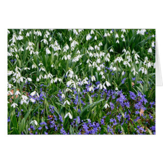 gotas da neve e flores azuis cartão