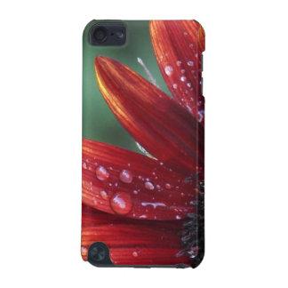 Gotas vermelhas das pétalas e da chuva do girassol capa para iPod touch 5G