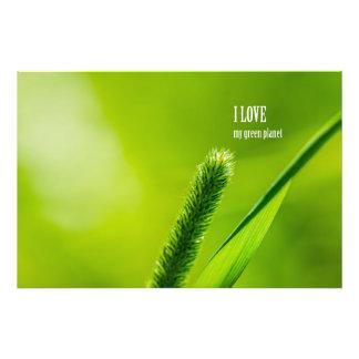 Grama verde e Sun - amor de I meu planeta verde Impressão De Foto