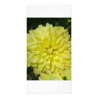 Grande Dhalia amarelo Cartão Com Foto