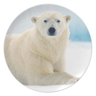 Grande varrão adulto do urso polar no gelo do prato