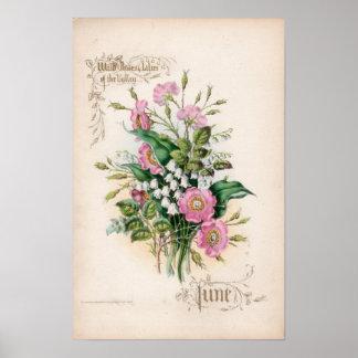 Gravuras botânicas, junho poster