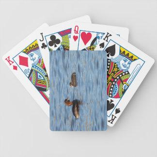 Grebe pequeno e pintinho jogo de baralho