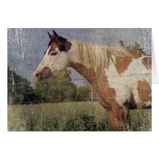 Grunge do cavalo do Pinto Cartão Comemorativo