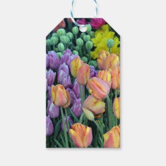 Grupo de tulipas coloridas