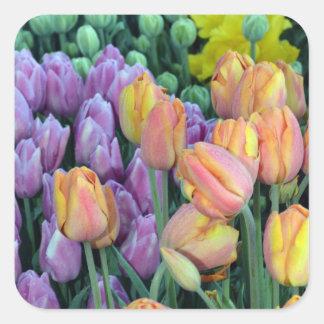 Grupo de tulipas coloridas adesivo quadrado