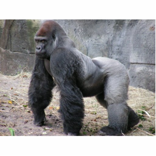 guarda da mesa do gorila escultura de foto