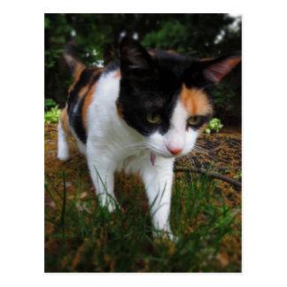 Harmonia, meu gato de chita cartão postal