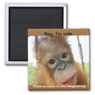 Hey, eu sou um primata bonito ímã quadrado