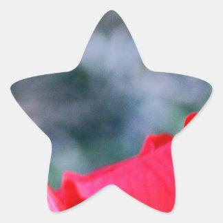 Hibiscus 4 adesito estrela