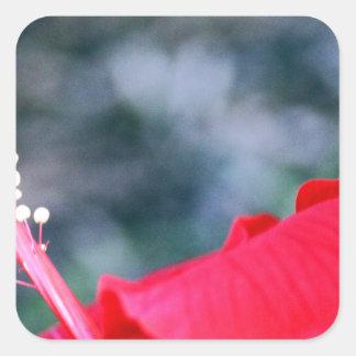 Hibiscus 4 adesivo quadrado