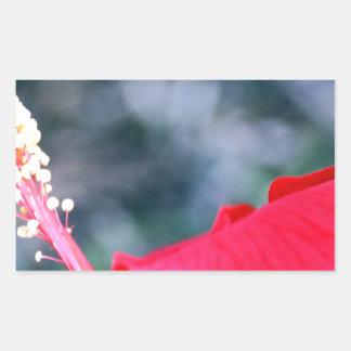 Hibiscus 4 adesivo retangular