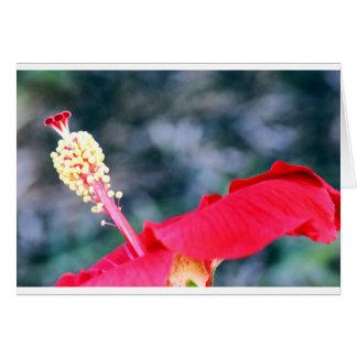 Hibiscus 4 cartão comemorativo