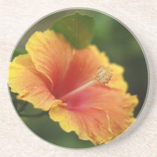 Hibiscus laranja-amarelo porta copos para bebidas