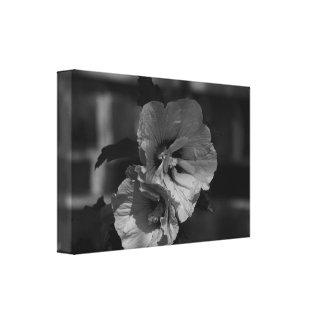 Hibiscus preto e branco impressão em tela
