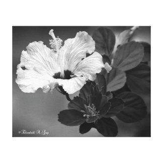 Hibisicus preto e branco elegante impressão de canvas envolvidas