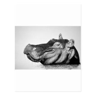Hipopótamo preguiçoso cartão postal