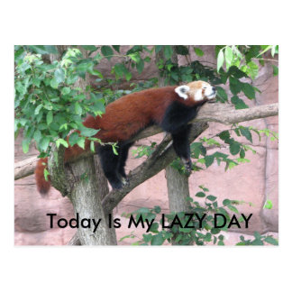 Hoje é meu DIA PREGUIÇOSO Cartão Postal
