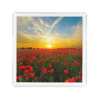 Horizonte maravilhoso do por do sol do campo da bandeja de acrílico