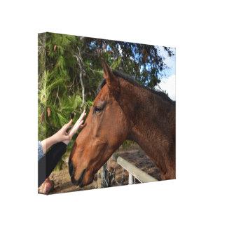 Horse_Pat, _Canvas_Picture.