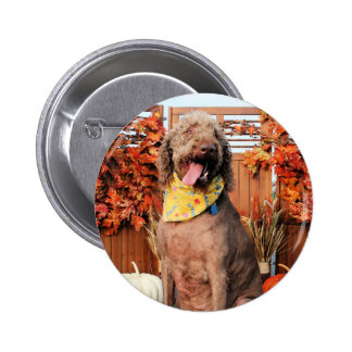 Howie - Labradoodle Photo-1 Botons
