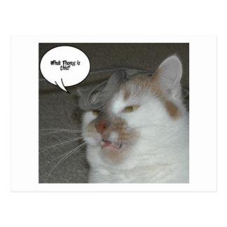 Humor do despedida de solteiro cartão postal