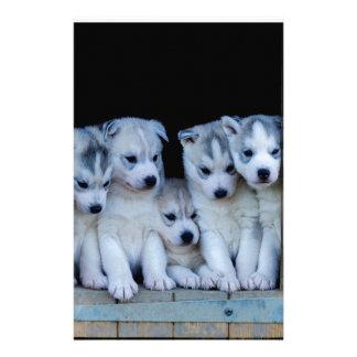 Husky puppies papelaria
