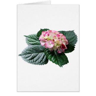Hydrangea cor-de-rosa e branco cartão comemorativo