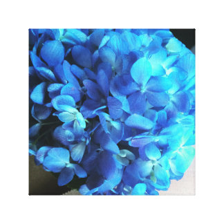 Hydrangea lindo
