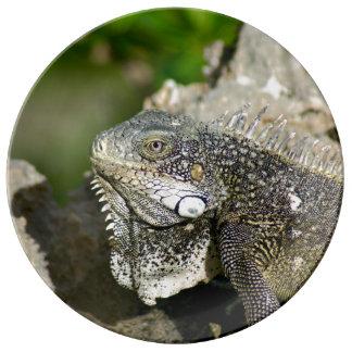 Iguana, Curaçau, caribe, porcelana da foto Pratos De Porcelana