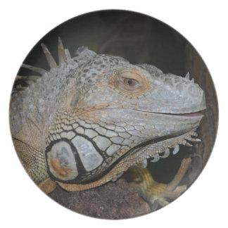 Iguana verde pratos