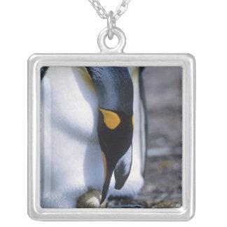 Ilhas Falkland. O pinguim de rei tende o único ovo Colar Banhado A Prata