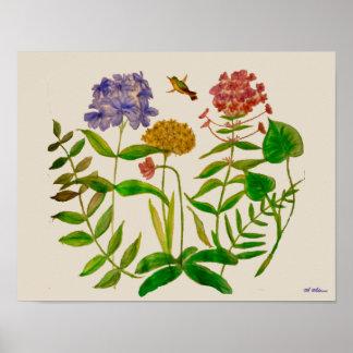 Ilustração botânica com plantas e poster do pôster