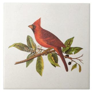 Ilustração cardinal do pássaro da canção do azulejo quadrado grande