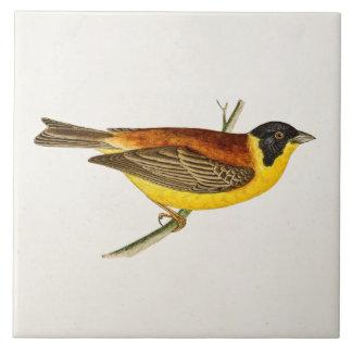 Ilustração do pássaro da canção do vintage - azulejo quadrado grande
