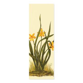 Ilustração do vintage da grama de estrela modelos cartão de visita
