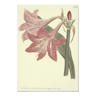 Ilustração veada pescada rosa do Amaryllis Convite 8.89 X 12.7cm