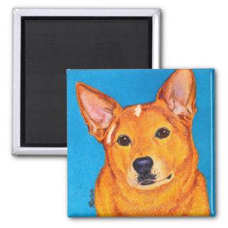 """Ímã australiano do cão do gado - """"vermelho """" imas de geladeira"""