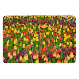 Ímã colorido do impressão das tulipas do primavera foto com ímã retangular