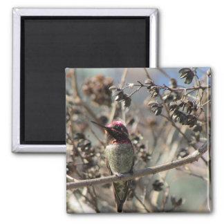 Ímã da foto do colibri de Anna Íman