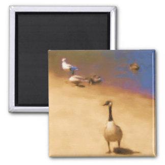 Ímã dos pássaros ímã quadrado
