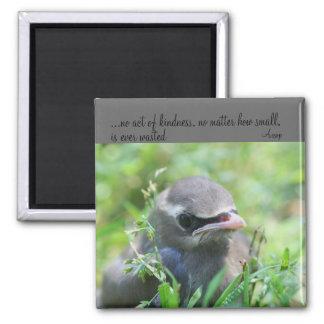 Ímã inspirado das citações da bondade do pássaro d imas
