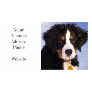 Imagem bonito do filhote de cachorro do cão de cartão de visita