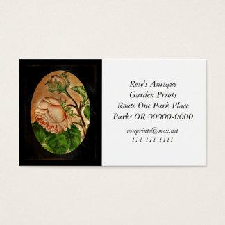 Imagem botânica dos rosas do pêssego cartão de visitas