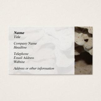 Imagem da esponja cartão de visitas