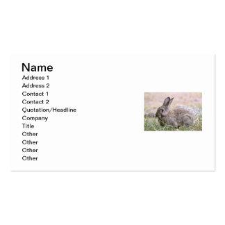 Imagem do coelho modelos cartões de visitas